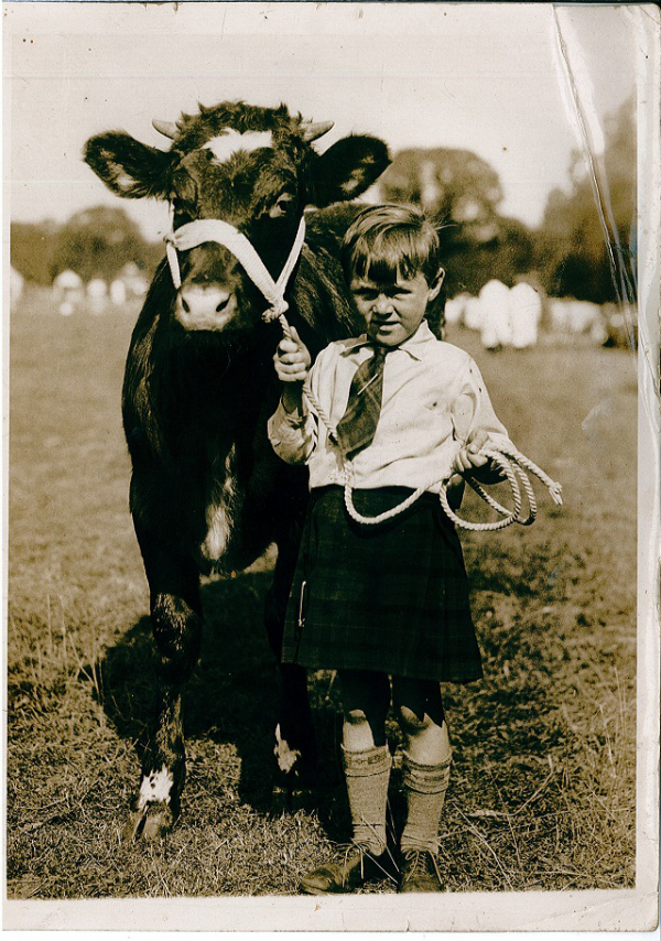 A very young John Gray with his prize winning Shorthorn bull.